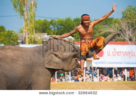 Mahout Sitting Elephant Trunk Surin