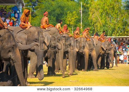 Surin Elephant Line Up Waiting Field
