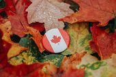 Round Circle Badge With National Canadian Flag Symbol Lying On Ground In Autumn Fall Red Yellow Oran poster