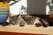 Tabby Cat Sleeps In Hot Summer Day poster