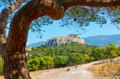 Picturesque view of Athens with The Acropolis and old pine in the park, Greece - Greek landscape     poster