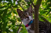 Close-up Portrait Of Cute Thai Cat, A Cat On The Tree poster