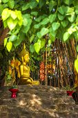 Beautiful Of Buddha Statue Under The Bodhi Tree At Wat Pan Tao Temple Is A Buddhist Temple (wat) In  poster