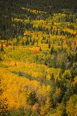 Autumn landscape from Peak to Peak high way in Colorado poster