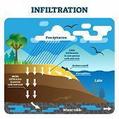 Infiltration Vector Illustration. Labeled Natural Precipitation Water Cleaning Through Underground S poster