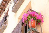 Geranium Pink Flower Pot In Balcony Veranda Segovia Spain poster