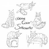 Cute Furry Maine Coon Cats Silhouettes, Black And White Pet Silhouettes Set, Adult Coloring Book Or  poster