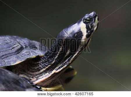 Close-up view of a little turtle