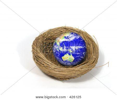 Erde im nest