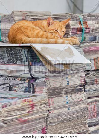 Cat Asleep At Work