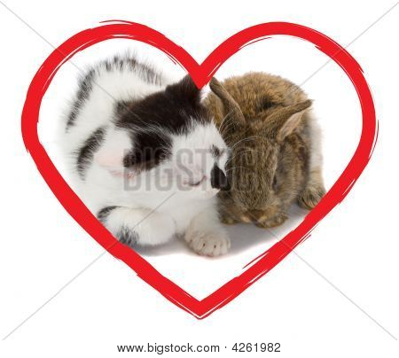 Kitten And Bunny In Heart