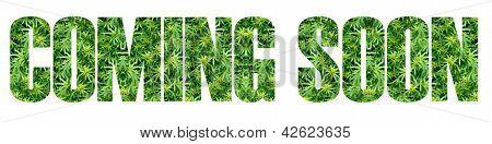 Marijuana Coming Soon