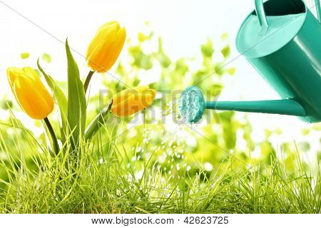Watering grass and flower with metallic watering can
