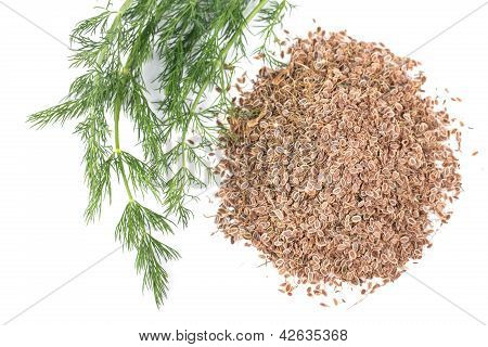 Fresh Dill And Dry
