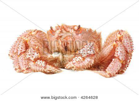 Alive Alaskan King Crab