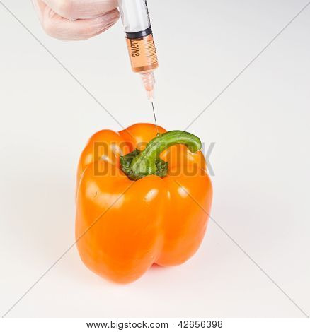 Injecting A Gmo Bell Pepper