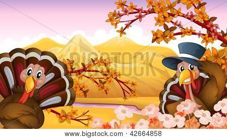 Illustration of two turkeys in autumn view