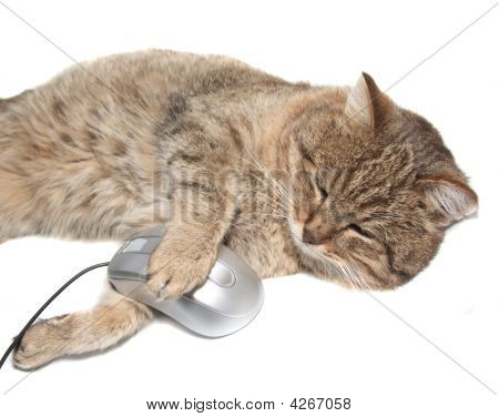 Cat With The Computer Mouse