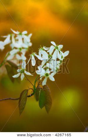 Selective Focus Flowers