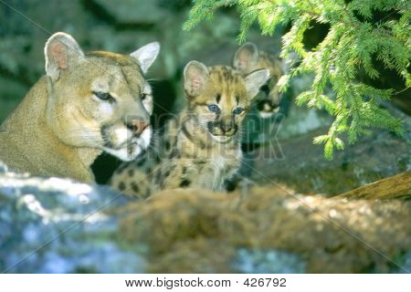 Mom Cougar And Kit