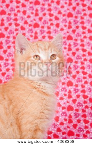 Yellow Kitten On Valentines Background