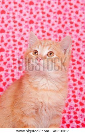 Yellow Kitten On Valentines Background