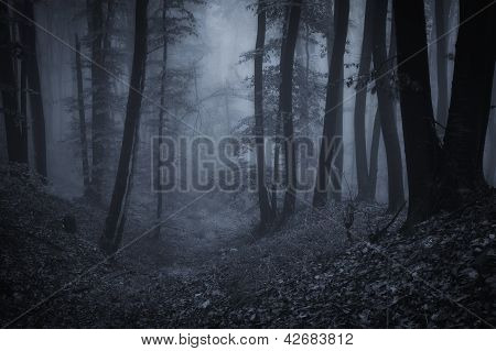 Night in a forest with fog