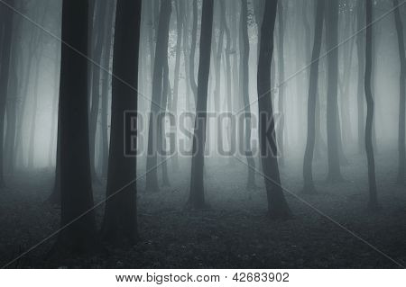 Dark forest with fog at night