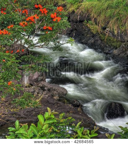 Little river at Big Island, Hawaii
