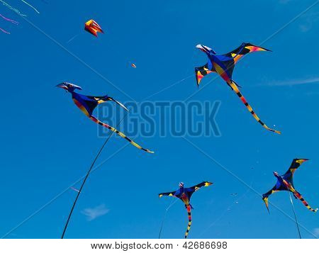 Vários Kites de pterodáctilo colorido voando em um céu azul brilhante na longa praia Kite Festival