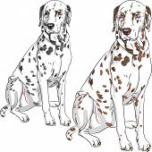 image of spotted dog  - Sketch of the cheerful serious dog Dalmatian breed two different color one  - JPG