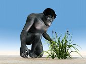 stock photo of habilis  - Homo habilis is a species of the genus Homo - JPG