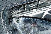 Постер, плакат: Мало тунец тунец Олби длинноперого тунца серебряный цвет