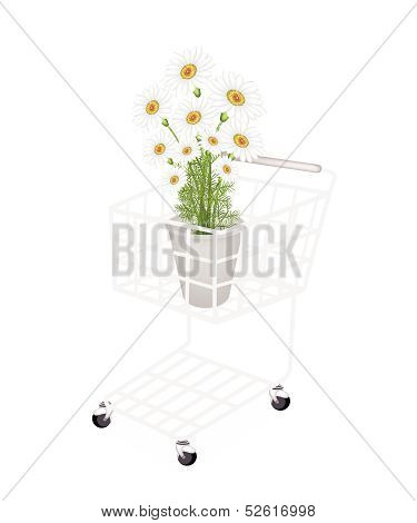 Beautiful Fresh Chamomile In A Shopping Cart