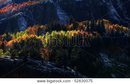 Early morning sun light on Aspen trees