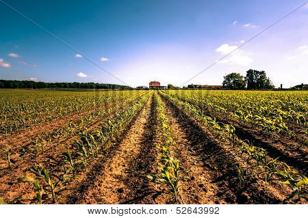 Countryside Field Crops