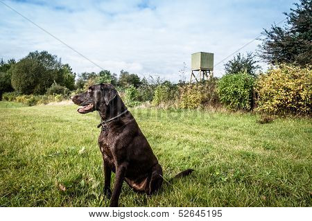 Dog Lookout