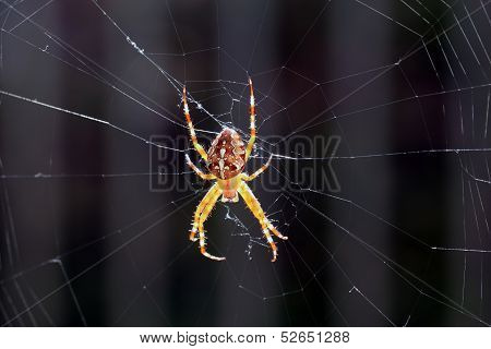 Closeup View Of A Spider In The Net