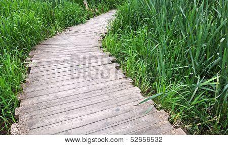 Old Planked Footway