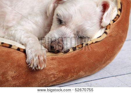 Sleeping Dog In Pet Bed