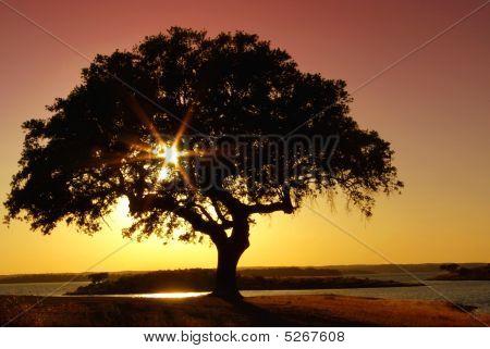 Tree In Alqueva Barrage.