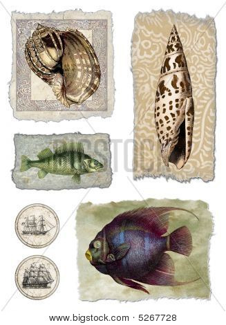 Shell and Fish Collage