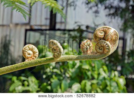 Tree fern, the details of spirals