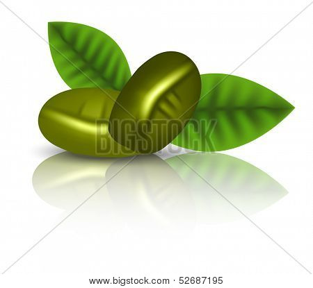 Green coffee leaves and grain. Vector illustration