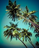 pic of jungle exotic  - Coconut palm tree isolated over tropical sky - JPG