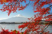 picture of mount fuji  - Mt Fuji in the Fall season - JPG