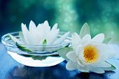 stock photo of lillies  - white lotus flower - JPG