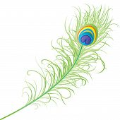 image of krishna  - Peacock Feather of lord krishna on the eve of janmastami - JPG