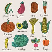 picture of vegetarian meal  - Tasty vegetables in vector set  - JPG