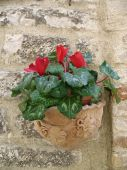 pic of assis  - Terra cotta flower pot hanging below a window in Assis Italy - JPG